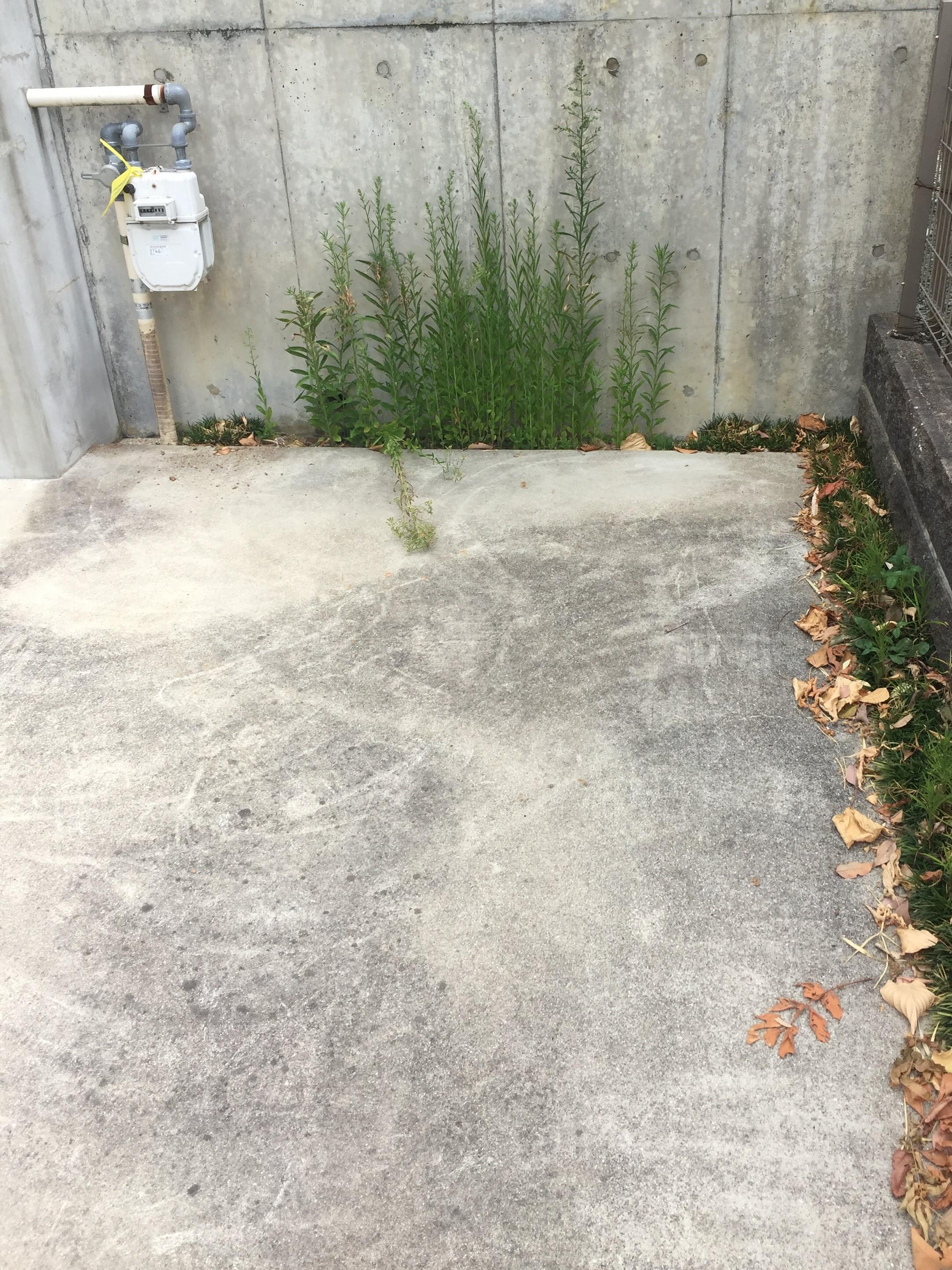落ち葉清掃・雑草処理・草刈り・草抜き 伊丹ハウスクリーニングおそうじプラスにお任せ下さい!