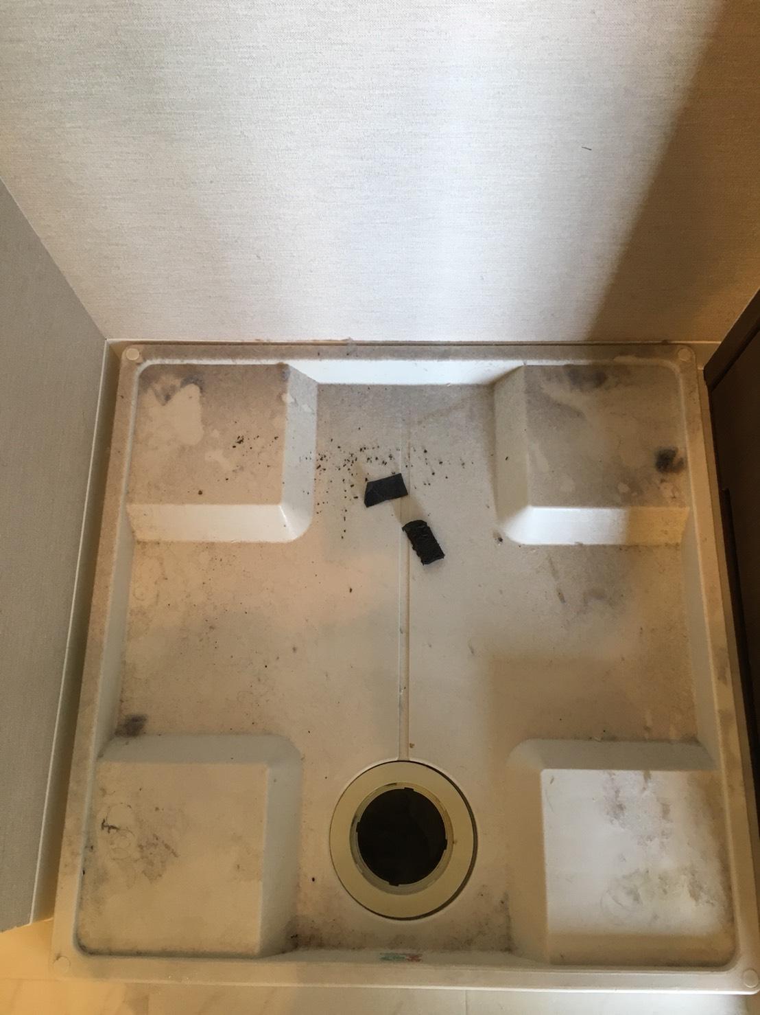 月に1度!洗濯機の排水口が汚れている?洗濯機からするイヤな臭い?おそうじプラスにお任せください!お掃除をする事で日々の生活環境をよくしていきます!